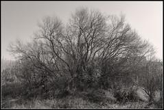 Por la margen derecha del Gállego (Fernando Forniés Gracia) Tags: españa aragón zaragoza sanjuandemozarrifar landscape blancoynegro virado bwvirado monocromático