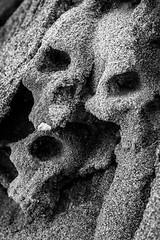 Sand Skulls (Mat Viv) Tags: canon canoneos760d canoneost6s 760d t6s sigma sigmalens sigma105mmf28macro 105mm macro detail blackandwhite monochrome monochromatic bnw skull statue art fineart sand travel italy tuscany versilia outdoors creepy horror scary strange depthoffield wow