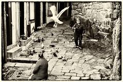 Porto - Portugal (Francisco (PortoPortugal)) Tags: 0732017 20170219fpbo495442 gaivota seagull intrusa intruder porto centrohistórico historicalcentre unescoworldheritagesite portugal portografiaassociaçãofotográficadoporto monochrome franciscooliveira