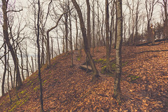 Upper Bluff (Tony Webster) Tags: frontenac frontenacstatepark lakepepin minnesota mississippiriver earlyspring forest leaves spring statepark trees unitedstates us
