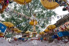 Symbols of Sand (Scott Rotzoll) Tags: cambodia newyear khmer buddhist buddhism temple pagoda chisor sand mound disciple travel religious umbrellas kampuchea