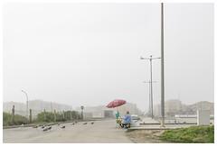 Furadouro (epha) Tags: aveiro centro ovar portugal seagulls birds superbock