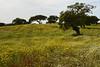 Monte das Vinhas_9ce (x-lucena) Tags: alentejo azinheira quercusilex montedasvinhas