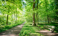 Invitation (Andy Brandl (PhotonMix)) Tags: landscape forest freshness greens woodenbench rest tranquility germany noone shadowsandlight pathway nikon photonmix