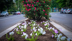2017.04.30 Vermont Ave, NW, Washington, DC USA 4261