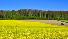 Travaux des champs (Diegojack) Tags: cossonay vaud suisse paysages campagnes colza printemps jaune