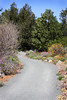 Leaning Pine Arboretum - Native Pathway (MGormanPhotography) Tags: leaningpinearboretum garden landscape sanluisobispo calpoly california native pathway bloom flower aster chilopsis eschscholzia agave dudleya