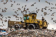 Landfill dozer 1 (AndyNewark) Tags: landfill bulldozer rubbish waste tip dump countryside spoil seagulls society throw away andynewark andrewcnewark