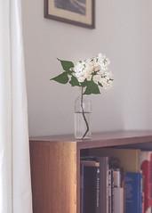 Bookshelf (Ralf Sternberg) Tags: flower bookshelf stilllife bottle