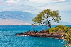 Dee's Tree (Zeta_Ori) Tags: maui westmauimountains wailea maalaeabay hawaii tree waileabeachpath lovestory
