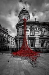 Weeping Window (moggsterb) Tags: bw weepingwindow poppies hull hullmaritimemuseum ukcityofculture selectivecolour red whalingmuseum