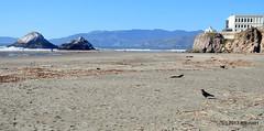 DSC_0301 (rachidH) Tags: scapes views pacific ocean sealrocks cliffhouse sutro baths tide lowtide lobos pointlobos oceanbeach sanfrancisco sf sanfran california rachidh nature