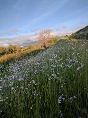 Lower Guadalupe River Trail (mishq00) Tags: lowerguadaluperivertrail santaclara california