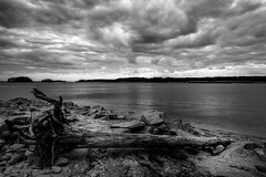 Dramatic Skies on Lake Lanier (John Cothron) Tags: 18nd 3stopsoftedgegraduatedneutraldensityfilter 6stopnd americansouth brownsbridgeroad canoneos5dmkiv cothronphotography distagon2128ze distagont2821ze dixie gainesville georgia hallcounty johncothron lakelanier lee90gs leefiltersystem leelittlestopper mountainviewpark silverefexpro2 southatlanticstates southernregion thesouth us usa unitedstatesofamerica zeissdistagont2821ze afternoonlight bw blackandwhite cloud cold deadtree drought lakeshore landscape longexposure lowwaterlevel monochrome nature outdoor outside reflection rock rockformations scenic sixstopneutraldensityfilter sky winter img16372170325 ©johncothron2017 dramaticskiesonlakelanier