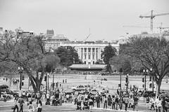 600_5070 (VMP photography) Tags: sakura washington cherryblossom tree travel capitol usa united unitedstates landmarks monuments jefferson lincoln