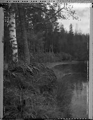 Lovers2 (Maija Karisma) Tags: polaroid instant pola littlebitbetterscan graflex growngraphic polaroidback instantback 4x5 51 negative peelapart sheetfilm nature roidweek2017