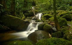 Within the Brazilian Atlantic Forest (Guilherme GMP) Tags: within brazilian atlantic forest tufototureto