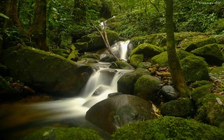 Within the Brazilian Atlantic Forest