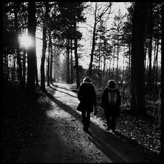 2012-11-25-0066.jpg (Fotorob) Tags: natuurverschijnsel bomen sunset land planten nederland bos saskiafraterman utrecht holland margit netherlands niederlande baarn