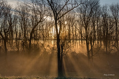 First Light at Belmont (clayguthrie13) Tags: missouri rural fog foggy sunrise trees backlight tree belmont rrpa0417