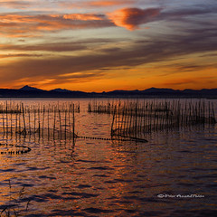 At peace (Pilar Azaa Taln ) Tags: light sunset sky espaa mountains color luz clouds reflections atardecer europa warmth cielo nubes puestadesol magical reflejos montaas mgico calidez seleccionar laalbufera garzasreales lagunalitoral pilarazaataln lalbuferadevalncia espejodelsol copyrightpilarazaataln