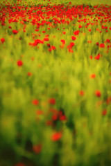 (Sgozyme) Tags: red abstract blur france green nature field poppy stains