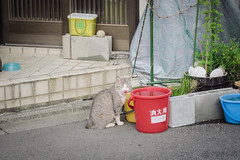 Today's Cat@2013-05-21 (masatsu) Tags: cat canon catspotting thebiggestgroupwithonlycats powershots95