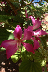 Unknown (lastwaterdragon) Tags: city tree nature colors leaves leaf singapore blossom cellphone iphone