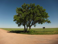 at the crossroads (Eli Nixon) Tags: road usa tree landscape colorado grover prairie choices crossroads drivebyshooting pawneenationalgrassland iso80 weldcounty shortgrassprairie