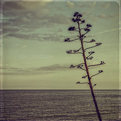Endless (s a s h i) Tags: sea tree clouds spain dusk horizon sitges sashi alexarnaoudov