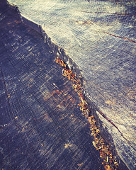 Wood (lamdogjunkie) Tags: wood tree cut chips carve stump photomatt