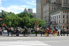 NYC - Manhattan - Carriage Lineup at Grand Army Plaza - Central Park South (jrozwado) Tags: nyc newyorkcity horse usa newyork carriage centralpark manhattan northamerica centralparksouth grandarmyplaza