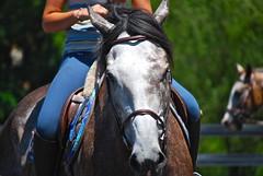 Gemini's Frost (Five Furlongs) Tags: family horses horse love barn farm riding pony jumper hunter ponies stable equestrian horsebackriding equine innova innovaridingstables