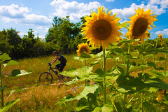 Out in the Fields (Tsvetan Banev) Tags: summer field bike bicycle bulgaria sunflowers sunflower fields velo lovech