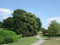 Millennium Green Jul 2013 (Paul Thackray) Tags: yorkshire footpath thorner 2013 millenniumgreen