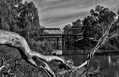 20131005_ScottKelbyPhotowalk2013_0167 (_Scorps_) Tags: bridge bw river scott landscape blackwhite australia nsw photowalk 61 waggawagga murrumbidgee kelby hampdenbridge