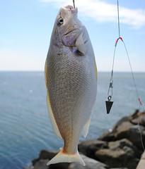 IV Международный турнир по спортивной рыбалке проходит в Кайо Гильермо