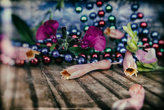 I Believe They Are Pansies (hbmike2000) Tags: flowers blue red plant flower green classic texture vintage necklace beads leaf bottle aloe nikon chest scratches sage salvia wetplate buds d200 dust flowerpower necklaces hcs niksoftware clichesaturday hbmike2000 compcorner analogefex
