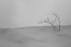 .simply. (Ferran.) Tags: snow catalonia days catalunya simply blanc neu ripolles simples choses queralbs senzill 201302febrer07