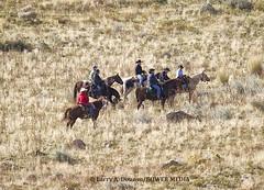 Cowboys and Cowgirls Moving the Buffalo toward the Hill top (Bower Media) Tags: road signs cowboys buffalo cowboy wasatch wildlife antelopeisland greatsaltlake bison cowgirls saltwater roundup naturephotography antelopeislandstatepark fieldinggarrranch larrydonoso larryadonoso