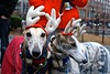 9th Annual Jingle Bell Walk, Boston MA