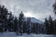 Engadin (RS_1978) Tags: schnee snow mountains alps alpes schweiz nieve sneeuw berge neve che neige alpen sn montagnes graubnden   celerina  sonycybershotdscrx10 typbridge