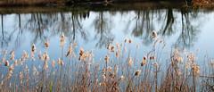 REFLEXES EN EL RIU FLUVIÀ (beagle34) Tags: rio paisaje catalunya 130 reflejos riu paisatge reflexes empordà baixempordà santperepescador fluvià canon7d