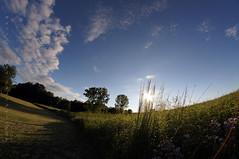summer memories (mariola aga) Tags: park trees light shadow summer sky sun sunlight nature grass clouds memories meadow fisheye sunflare thegalaxy vigilantphotographersunite vpu2