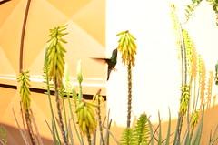 Colibri (Gabyroocks) Tags: love animal cool nice natural fisheye loveit just nectar moment colibri amaizing