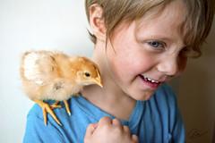 Chicks Dig It (cheslah) Tags: boy chicken toddler child north chick carolina ninjababy