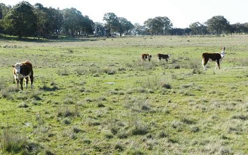 1721 Golspie Road, Golspie NSW 2580