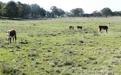 1721 Golspie Road, Golspie NSW