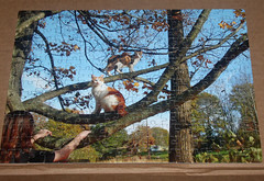 Custom Family Puzzle Finished photo of the day 3/29/2017 (Patches Madison) Tags: custom puzzle samuel lee patches calico tree hanging out having fun landscape kayla memory memories ♥ family