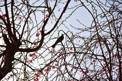 20170406_016_2 (まさちゃん) Tags: silhouette シルエット 鳥